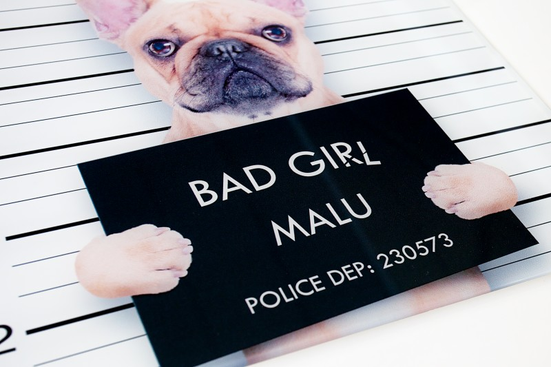 Obraz BAD DOG GIRL
